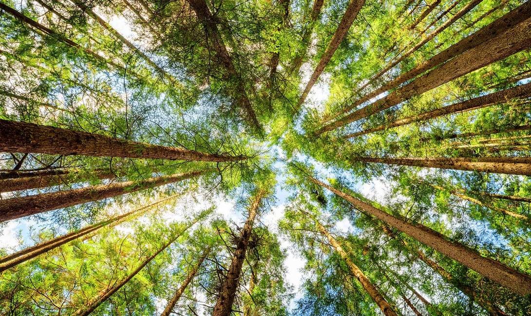 Metsä Fibrelle uuden sukupolven mittauslaitteet