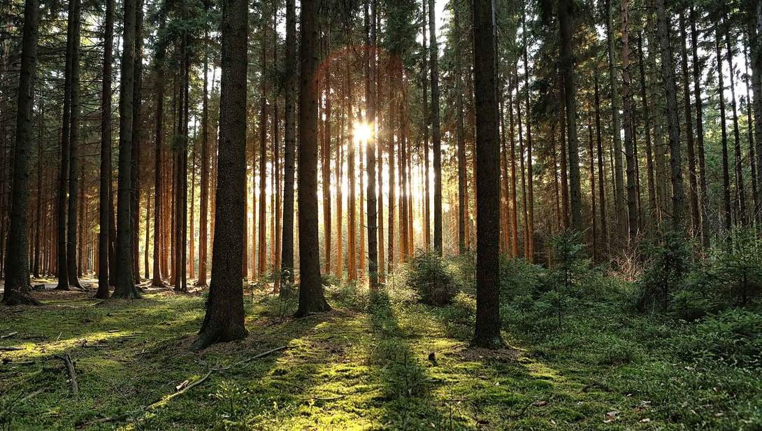 Finnoksen ja Metsä Fibren kumppanuus saa jatkoa Rauman sahalla