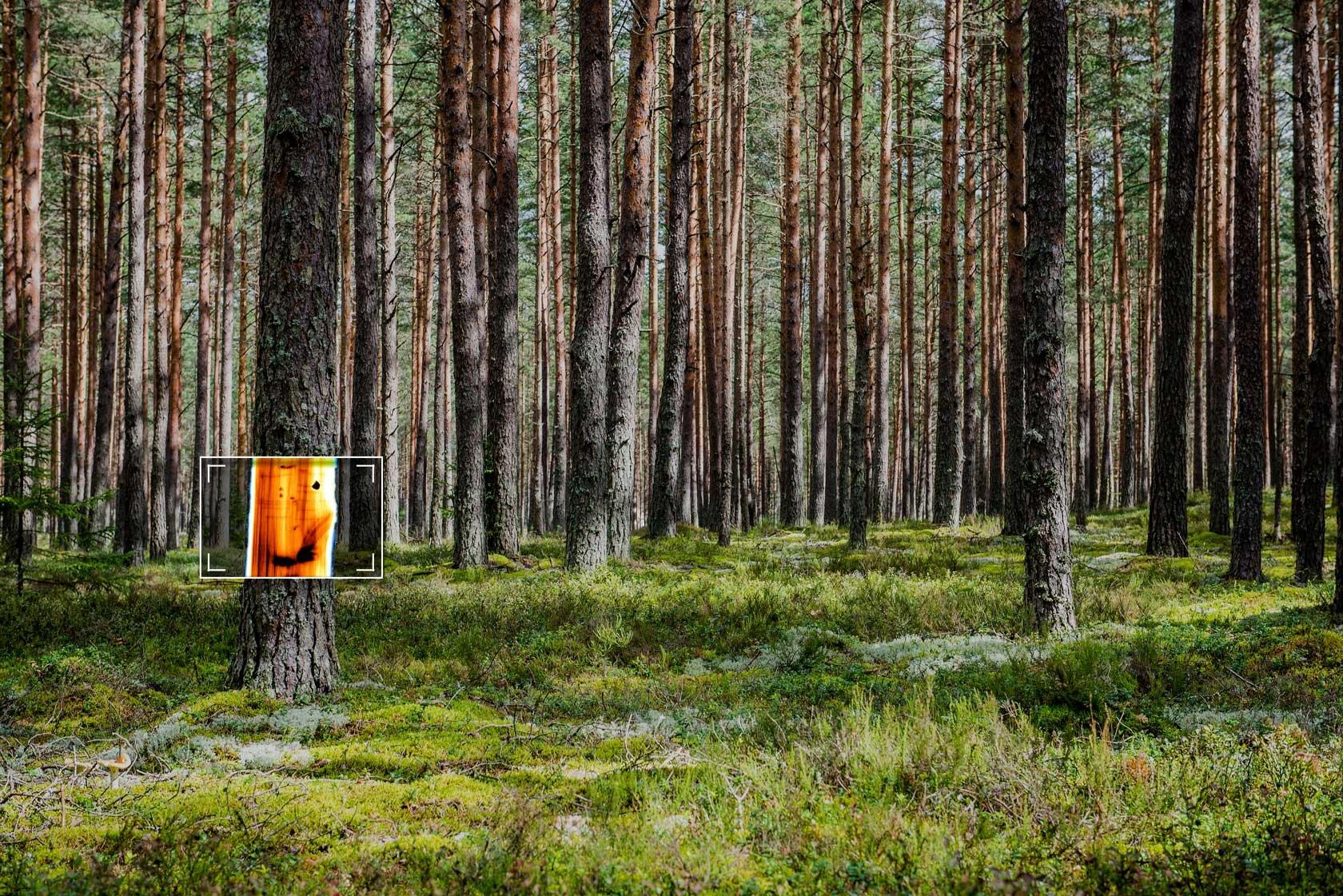 Finnos-Metsa-Sellu-Tiili-teollisuuden-Uusi-ulottuvuus-1