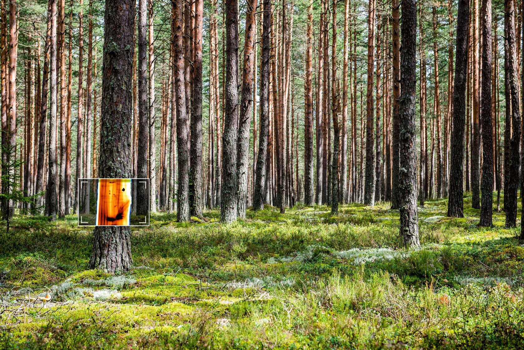 Finnos-Metsa-Sellu-Tiili-teollisuuden-Uusi-ulottuvuus