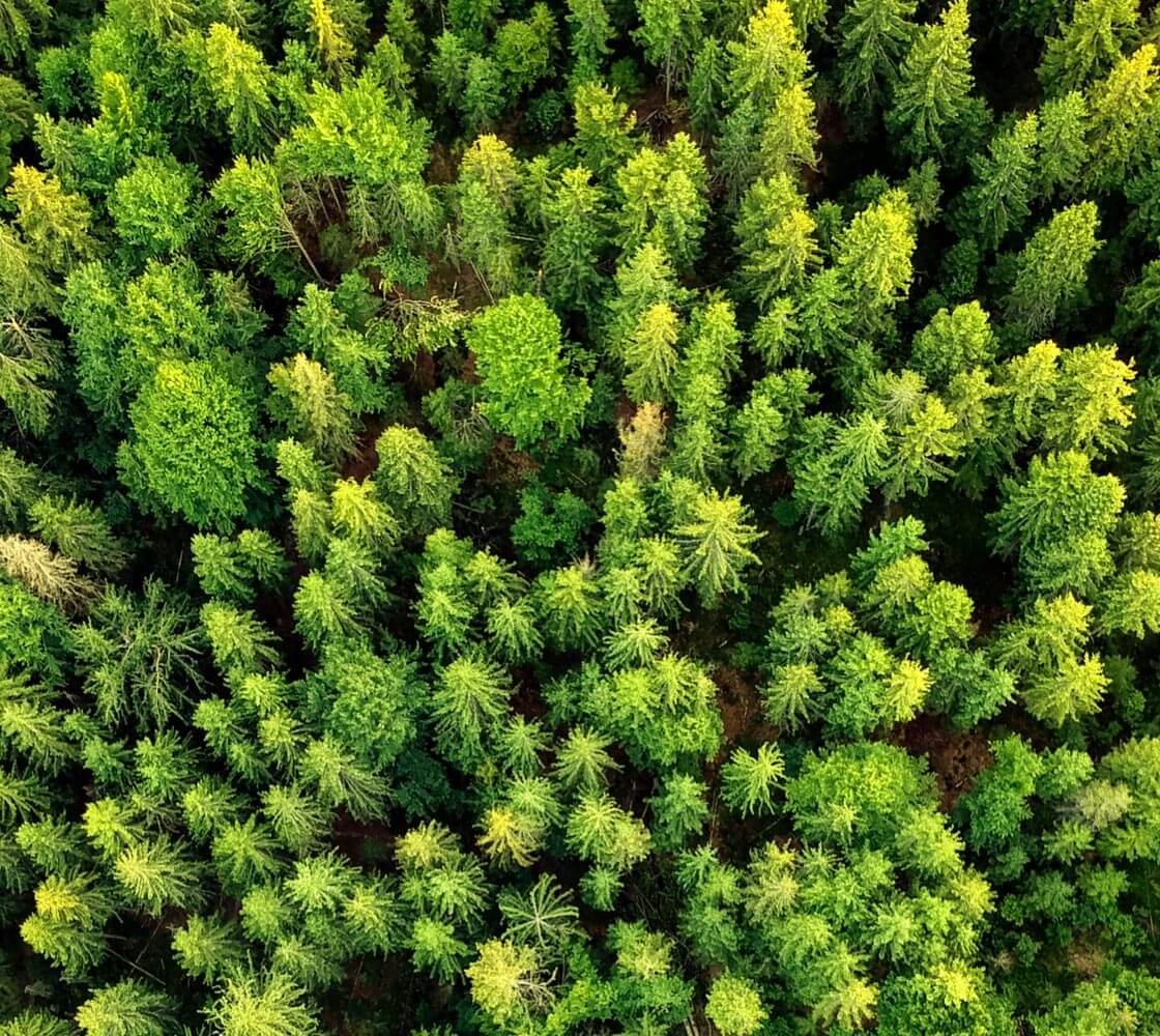 Pulp and Bioenergy - Finnos